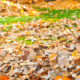 leaf removal and pick up company - New Horizon Property Management